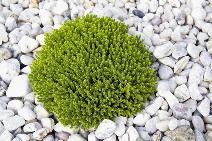 Grau verdrängt grün: Das Umweltreferat stellt einen Trend zur Versiegelung von Vorgärten fest. (Foto: © styleuneed - Fotolia.com)
