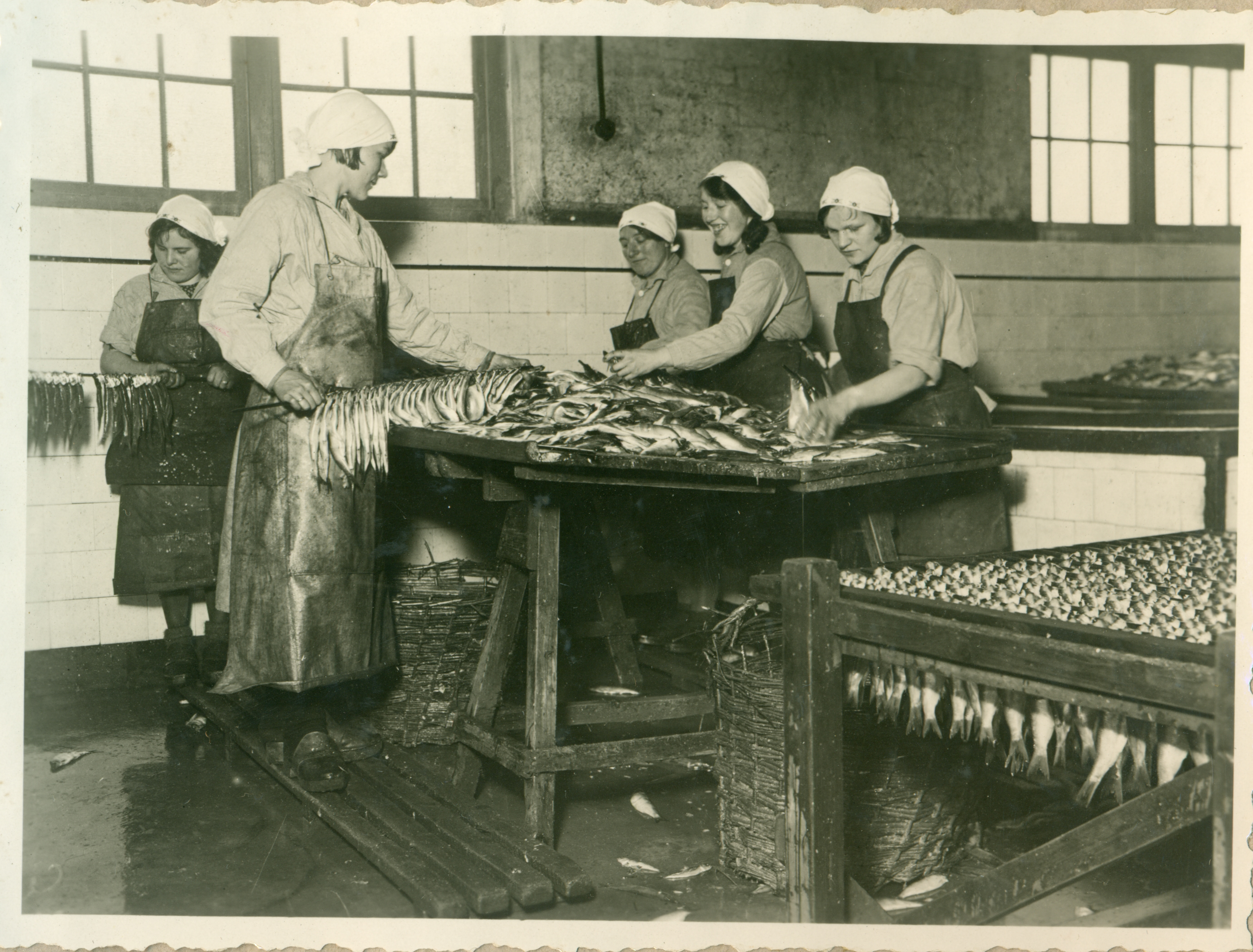 Cuxhaven und der Fisch - Sonderausstellung im Museum