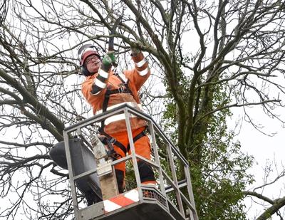 Baumpflege per Hubsteiger