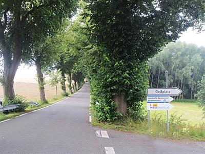 Abschnitt der Alleenstraße