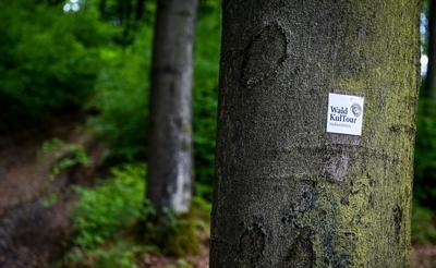 """© Daniel Schröder - Die WaldKulTour-Route """"Klosterwirtschaft"""" ist ein neun Kilometer langer Rundwanderweg im Naturpark Arnsberger Wald bei Rumbeck. Foto: Daniel Schröder"""