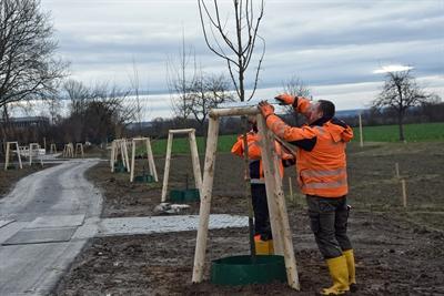 © Stadt Lippstadt - Bäume soweit das Auge reicht: Am Alleenweg warten zahlreiche Feldahorne auf einen Baumpaten. Foto: Stadt Lippstadt