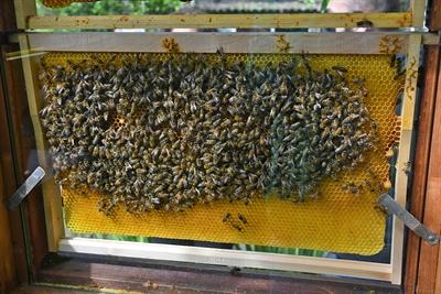 Die Bienenschauanlage des Schulbiologiezentrums im Botanischen Garten