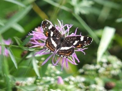 ©  - Besonders Schmetterlinge und andere Insekten freuen sich über eine üppige Blütenpracht.